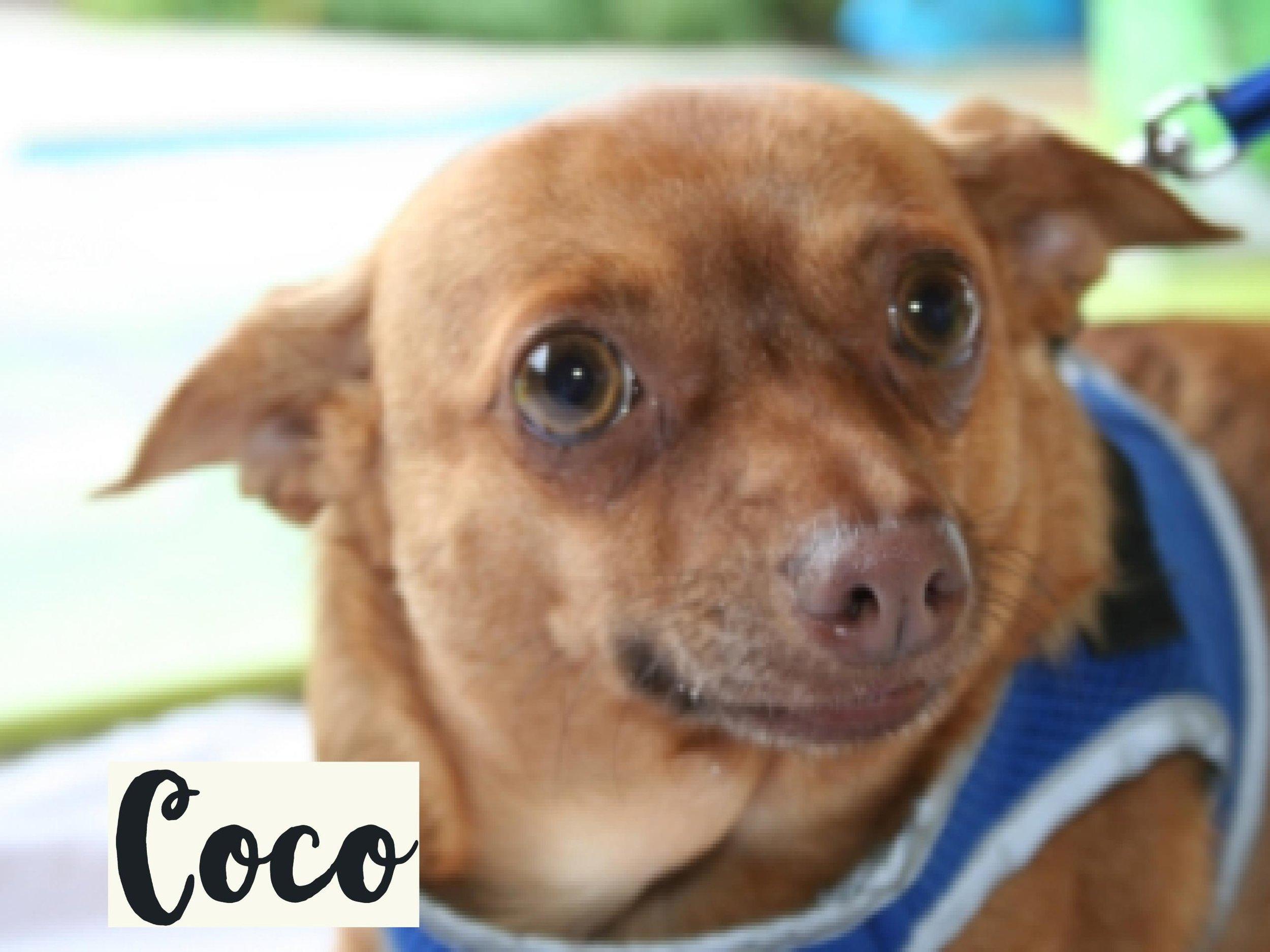 Coco_WV17.jpg