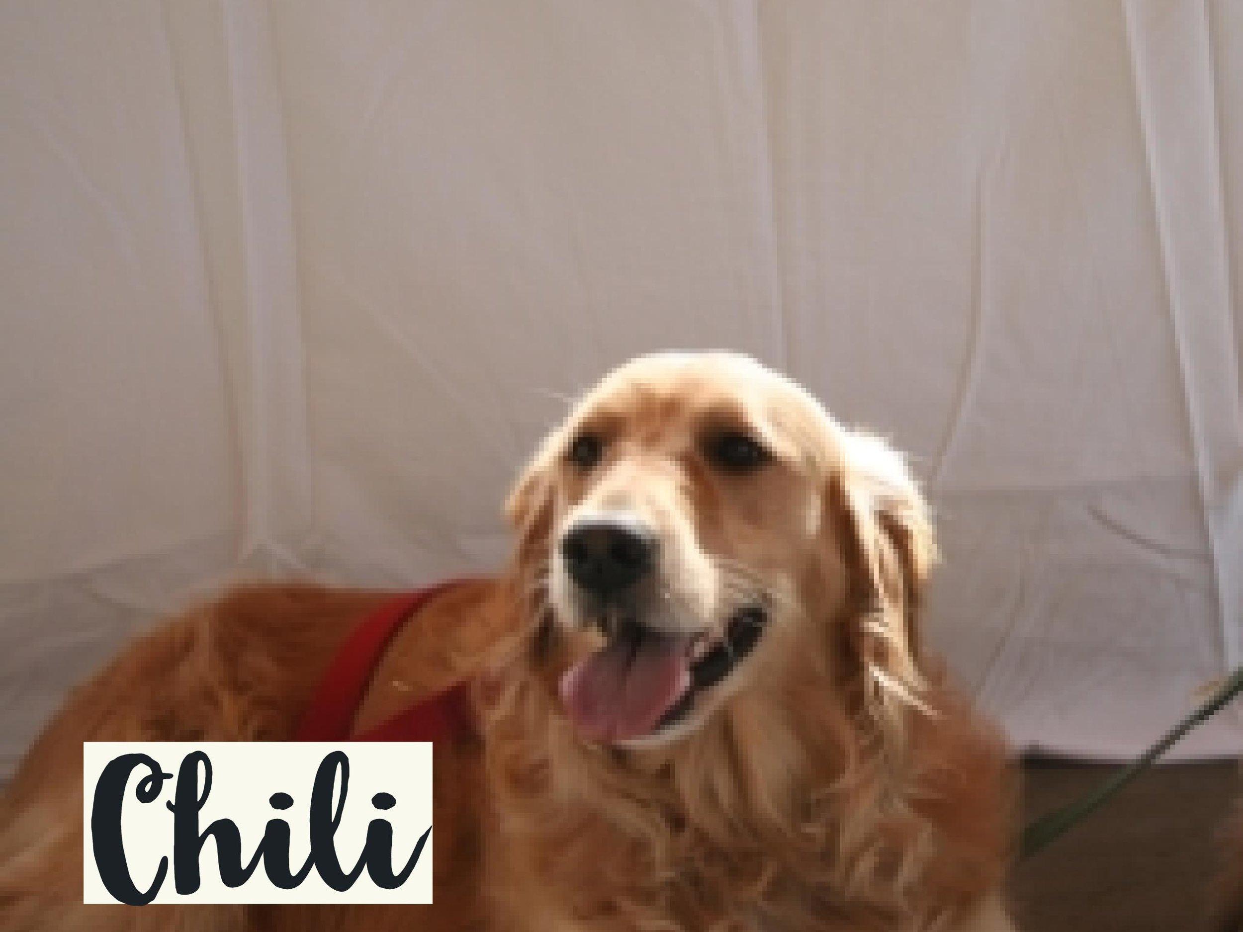 Chili_WV17.jpg