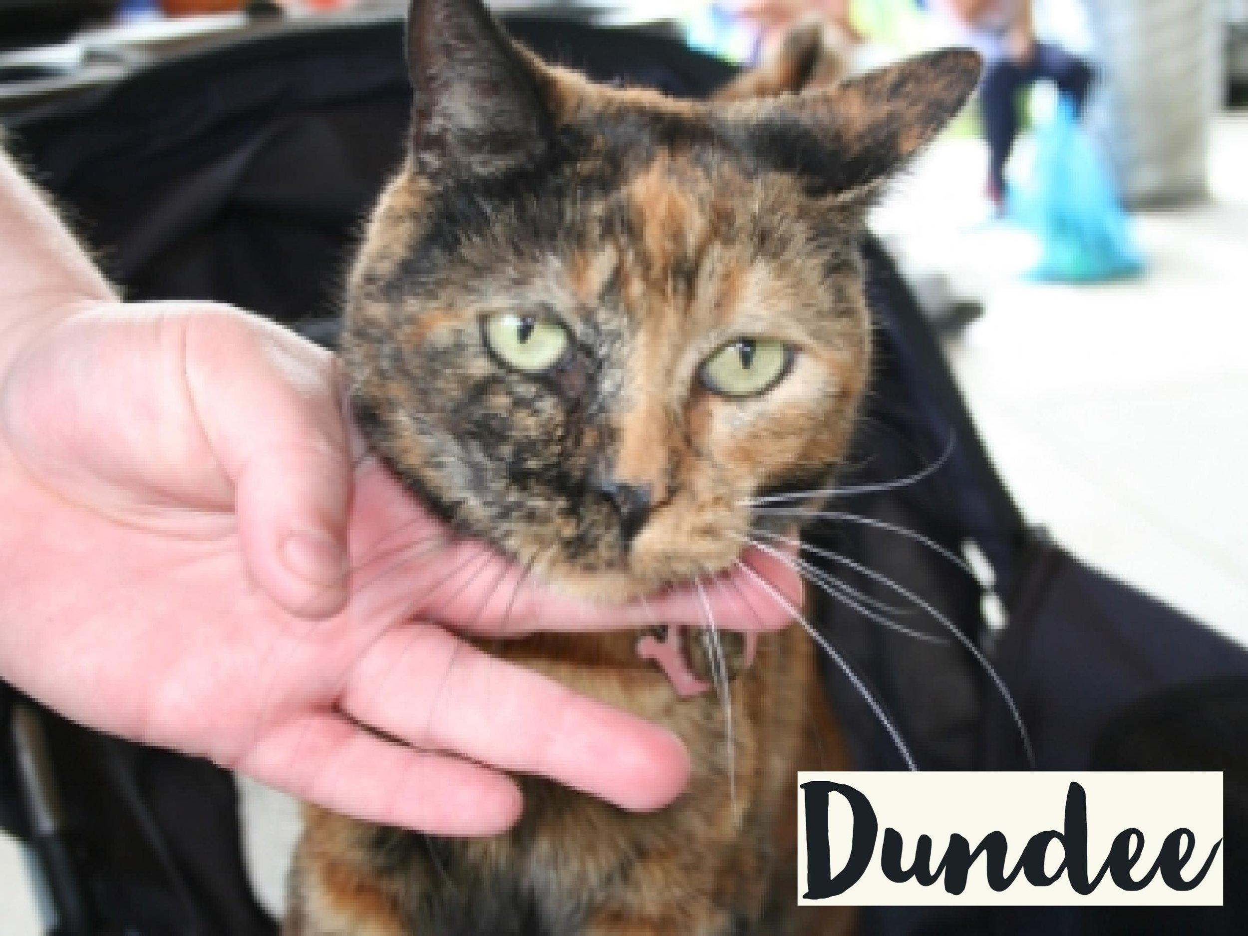 Dundee_WV17.jpg