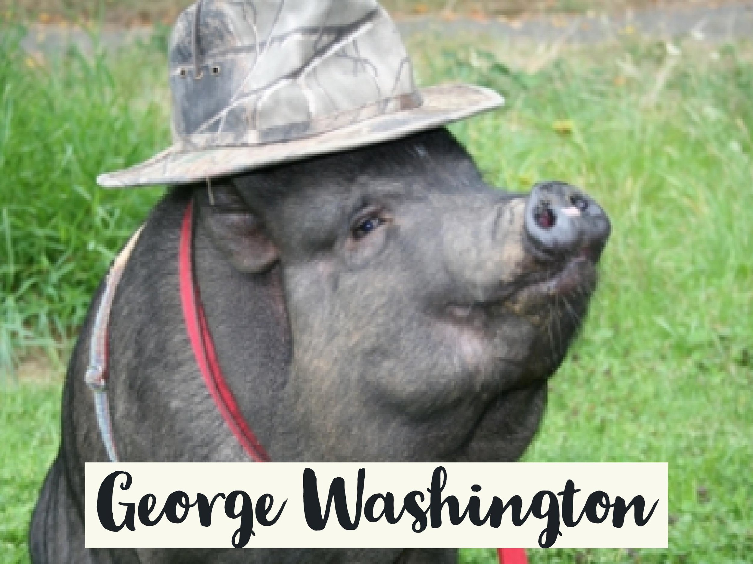 GeorgeWashington_WV17.jpg