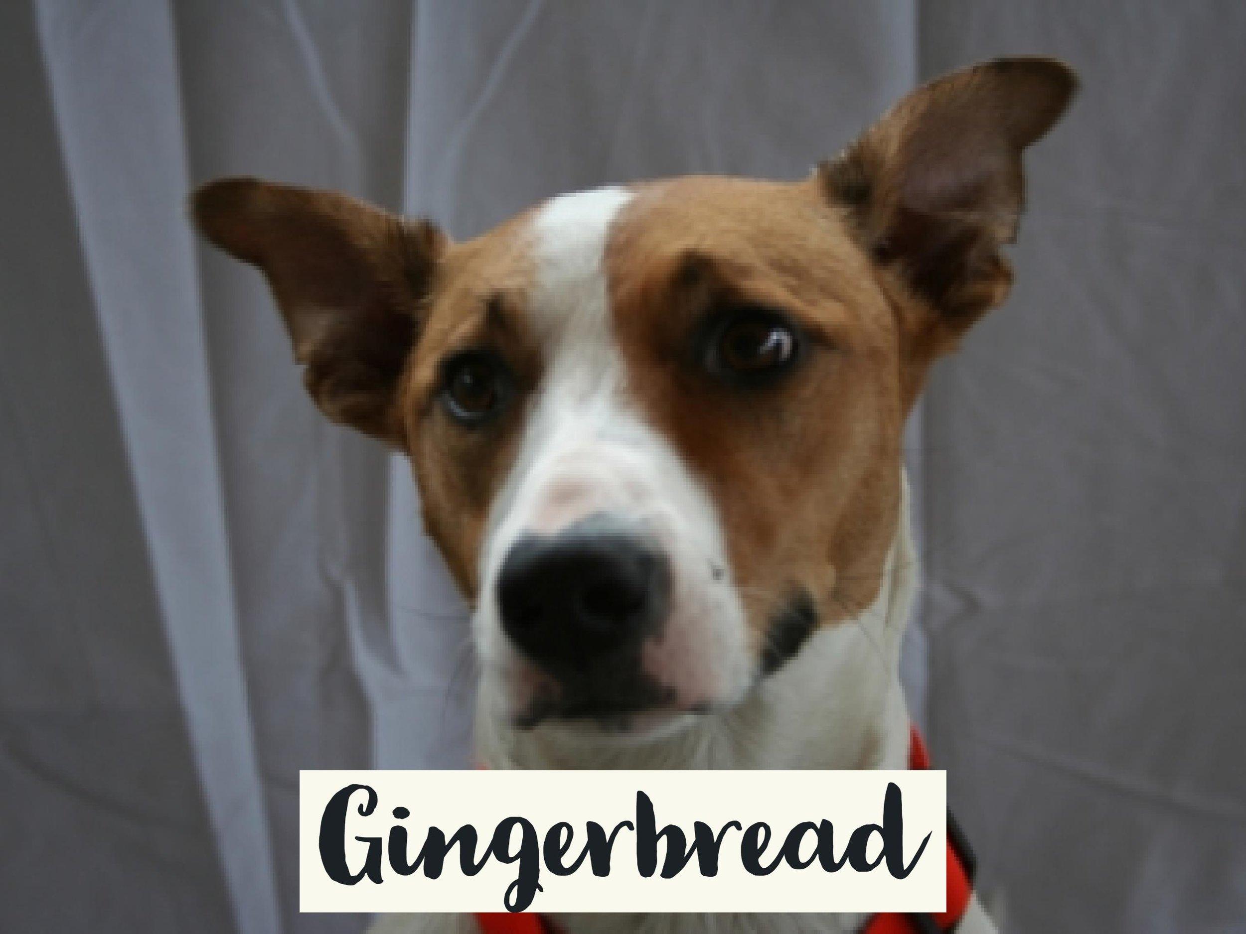 Gingerbread_WV17.jpg