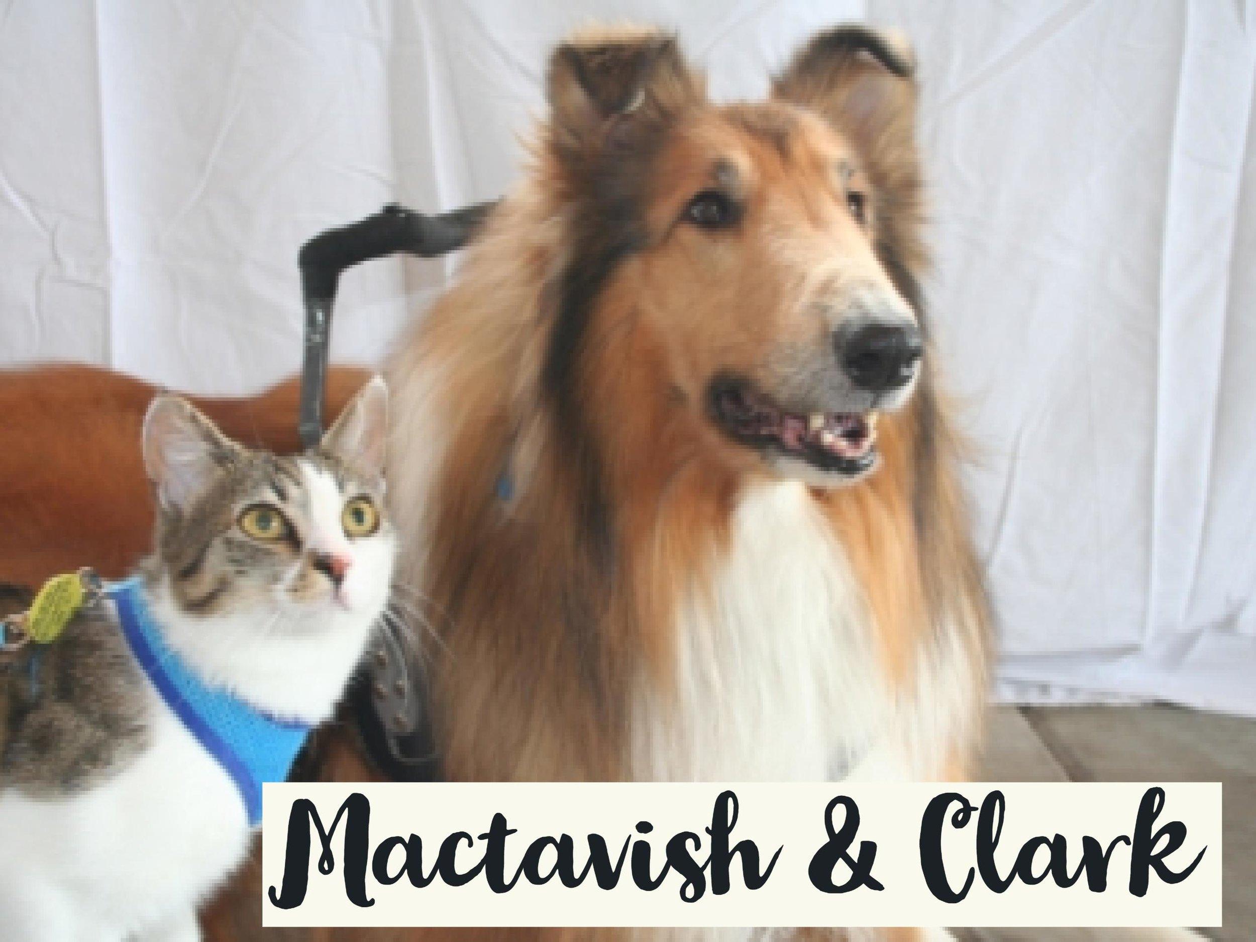 Mactavish-Clark_WV17.jpg