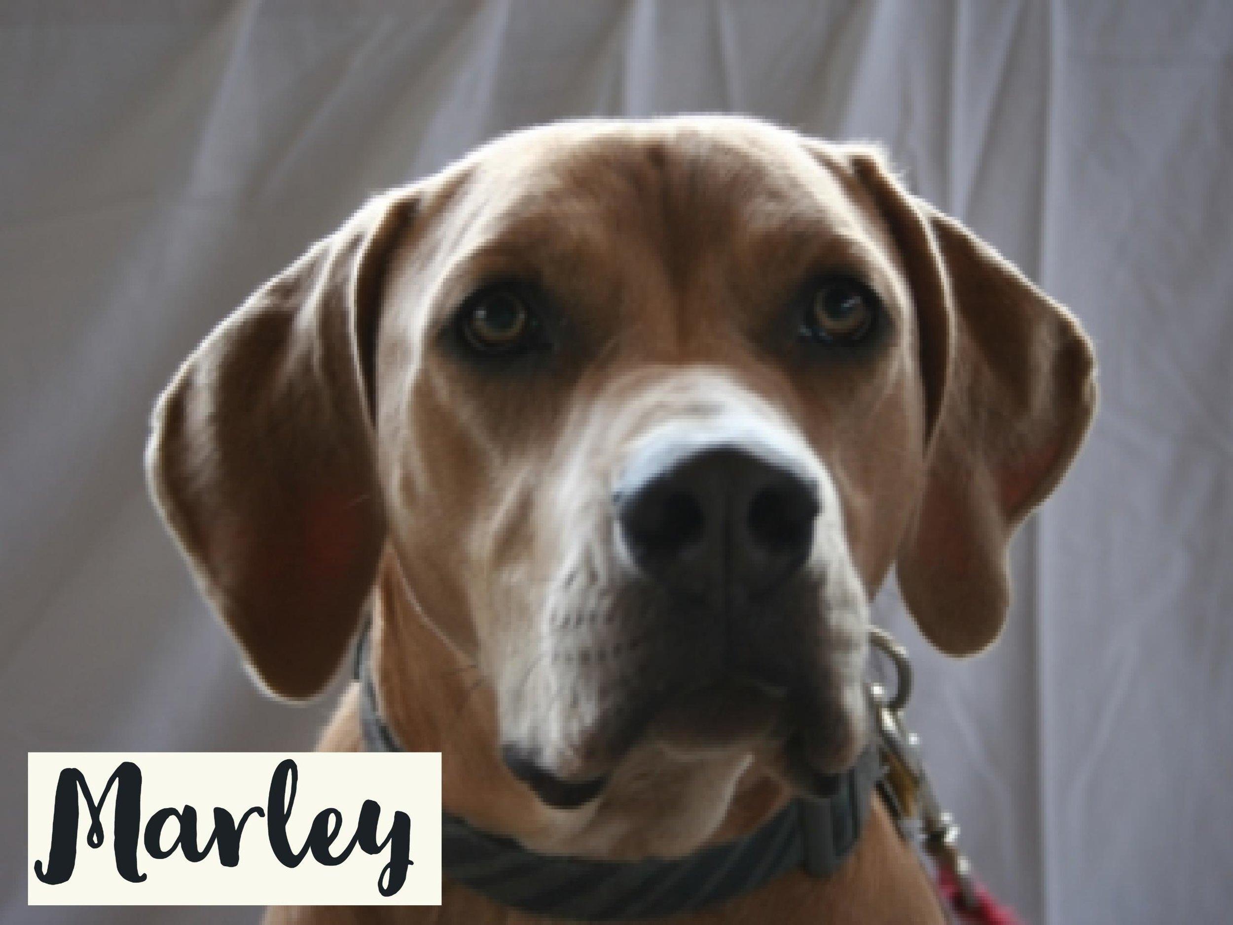 Marley_WV17.jpg