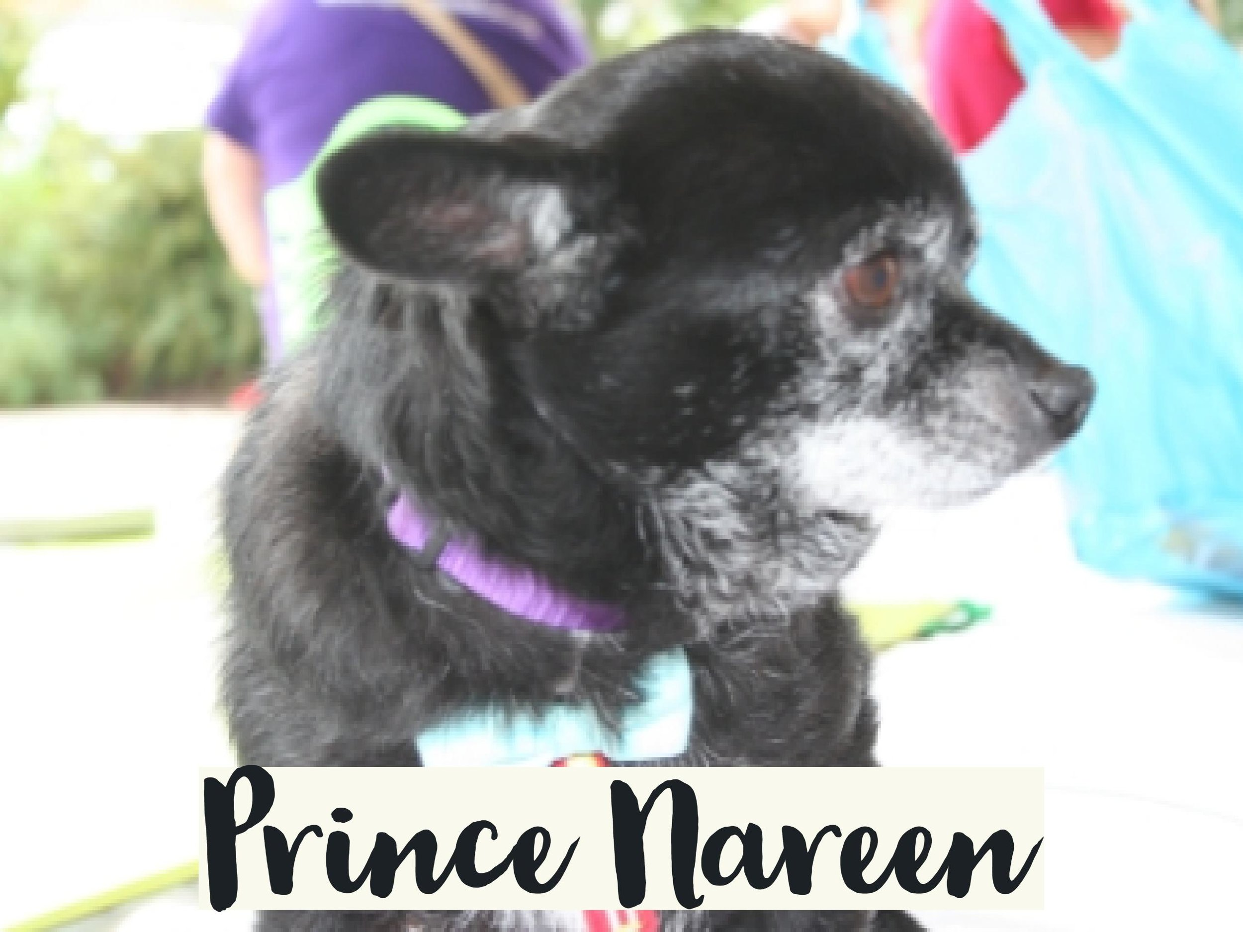 PrinceNareen_WV17.jpg