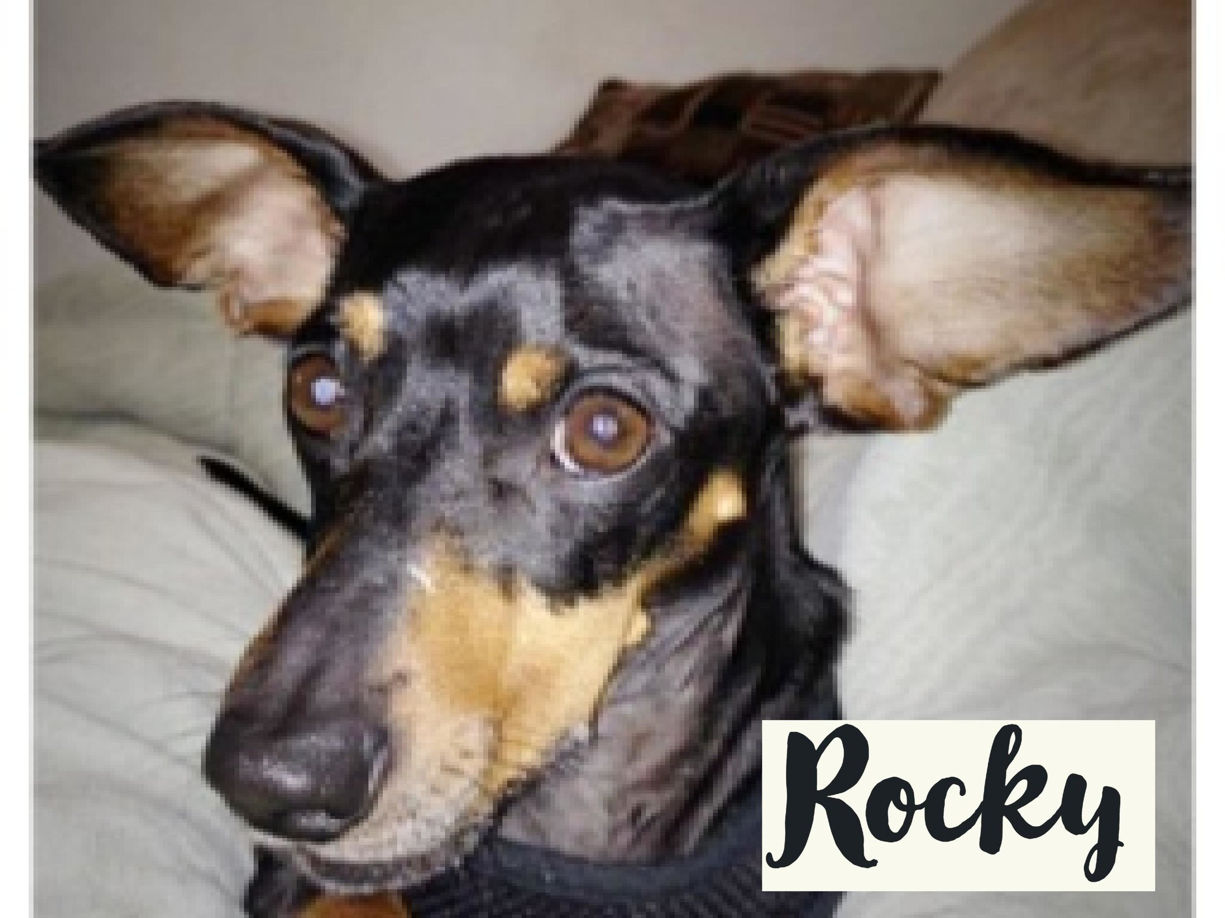 Rocky_WV17.jpg