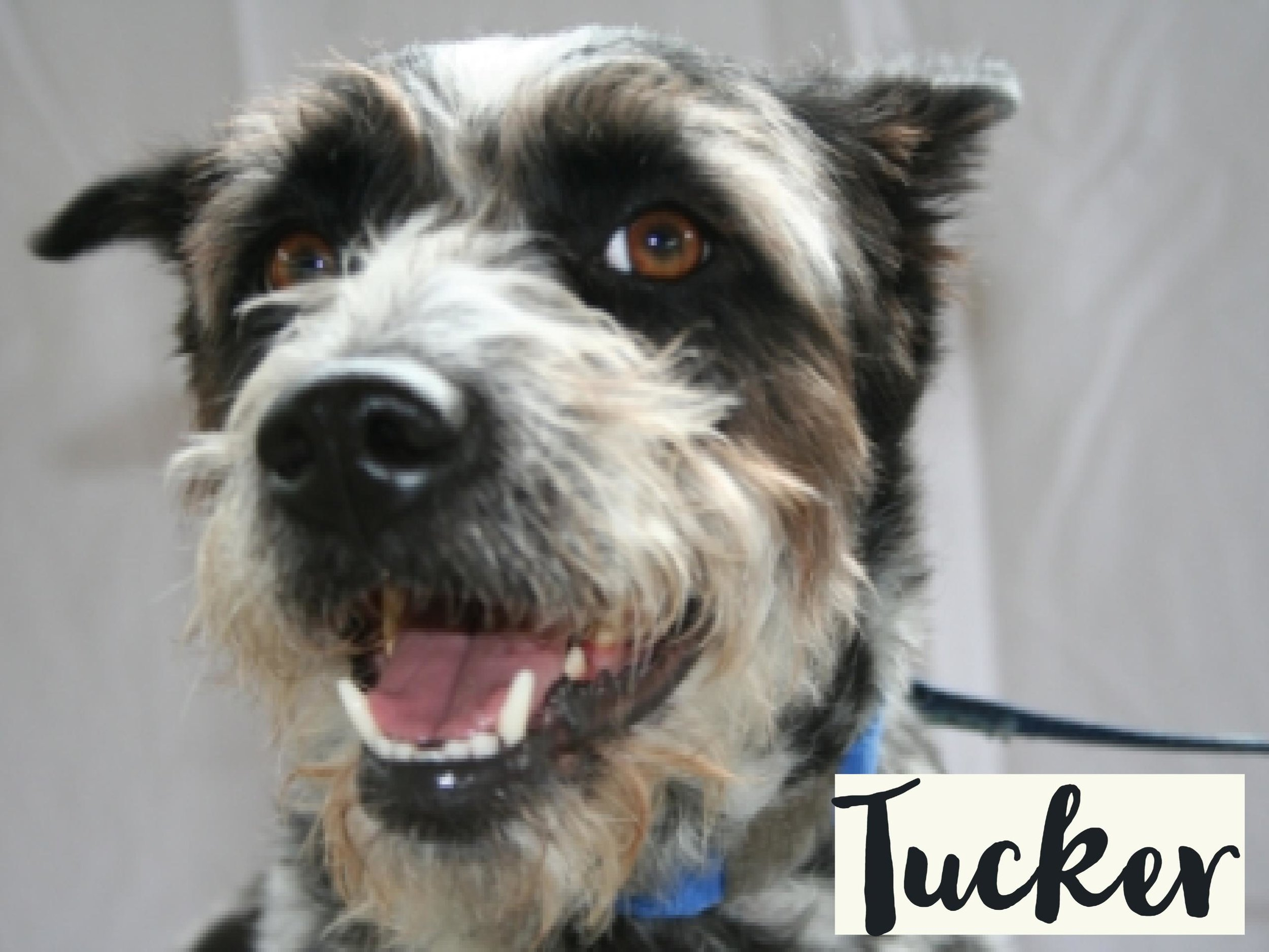 Tucker_WV17.jpg