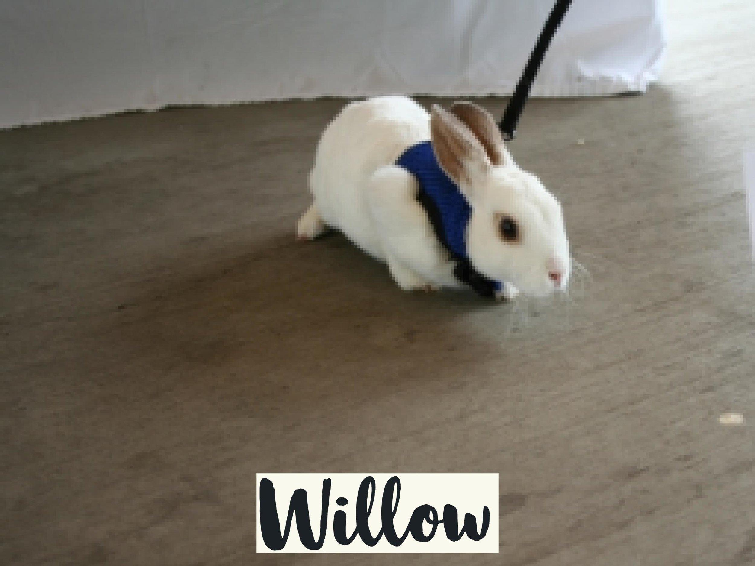 Willow_WV17.jpg