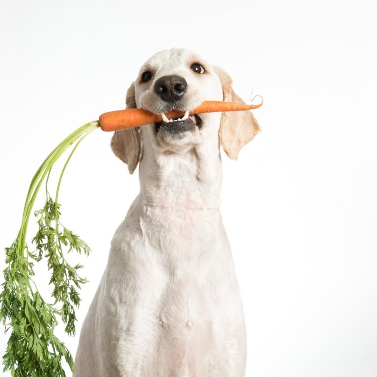 dog-carrot.jpeg