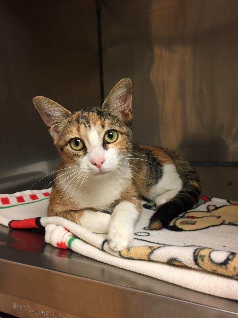 Glitter recently arrived at CAT from a shelter in Houston