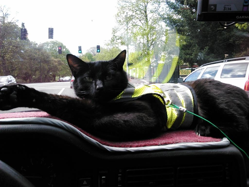 Mr. Jinx enjoying the ride on the dash