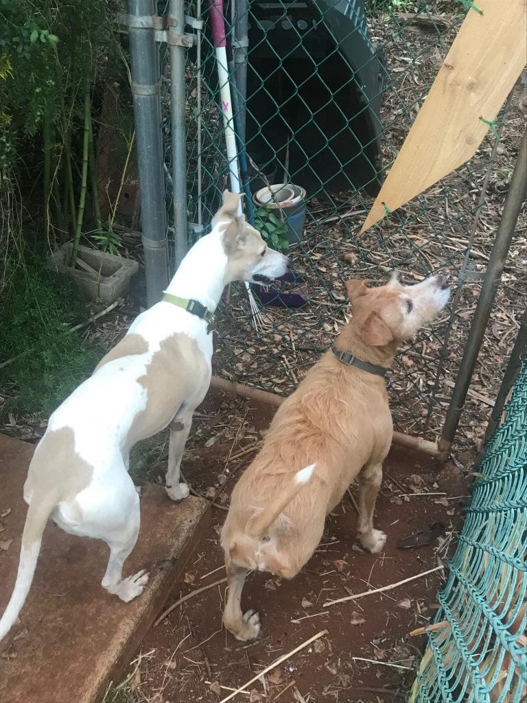 Saving the Dogs of KauaiFurry FunPlanner — Spot Magazine