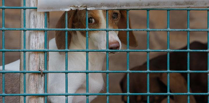 puppymills-bestfriends.jpg