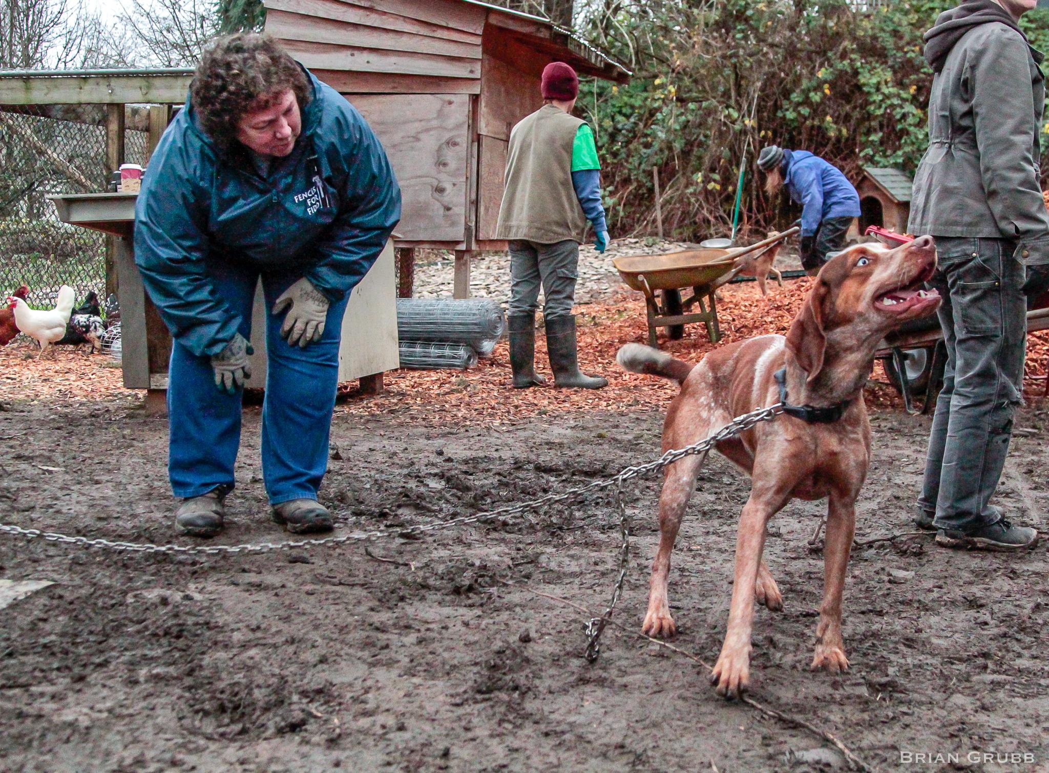 Sue Heublein helps unchain a Fido. Photo by Brian Grubb