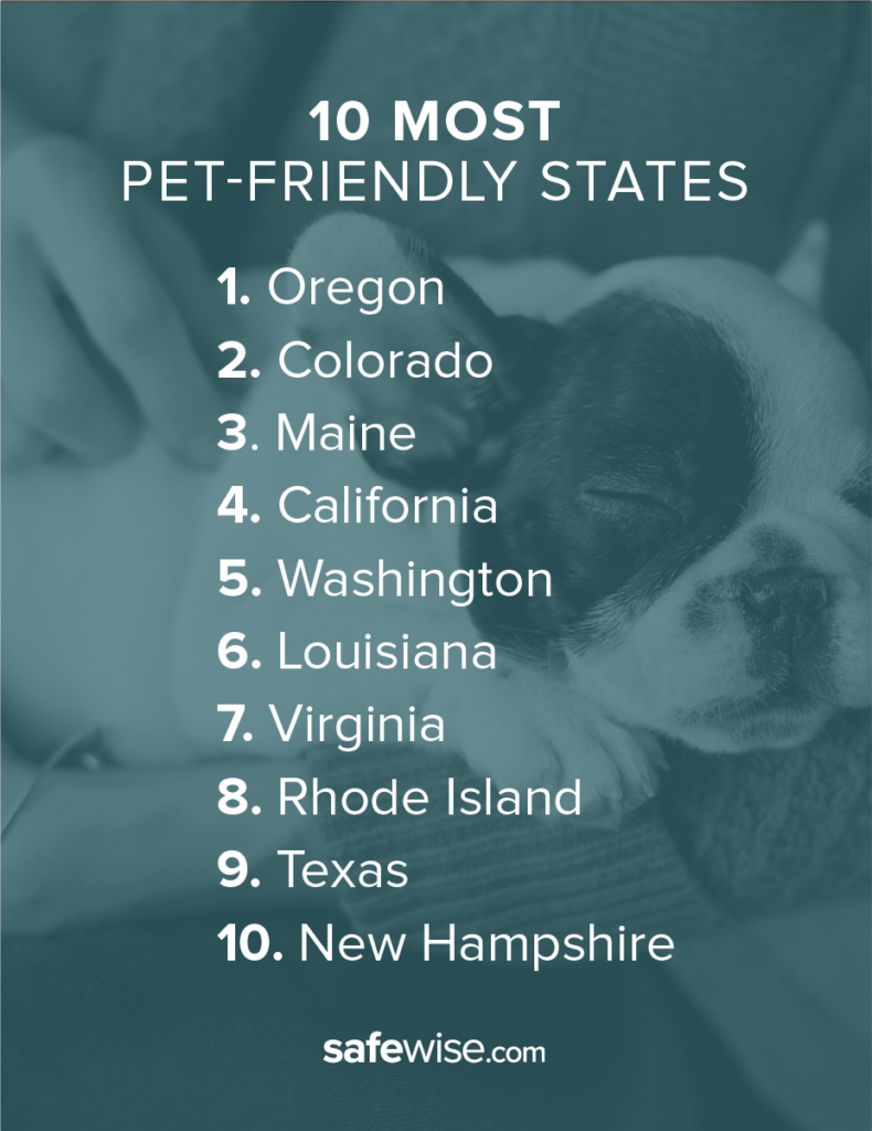 The top pet-friendly states, according to rankings by Safewise and major animal welfare organizations