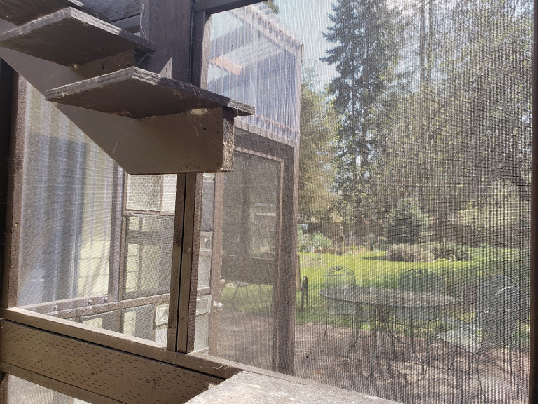 This catio uses a variety of materials, including reclaimed windows, pet screen, corrugated plastic, and glass block. A previous version used wire fencing, which allowed birds to accidentally get inside.