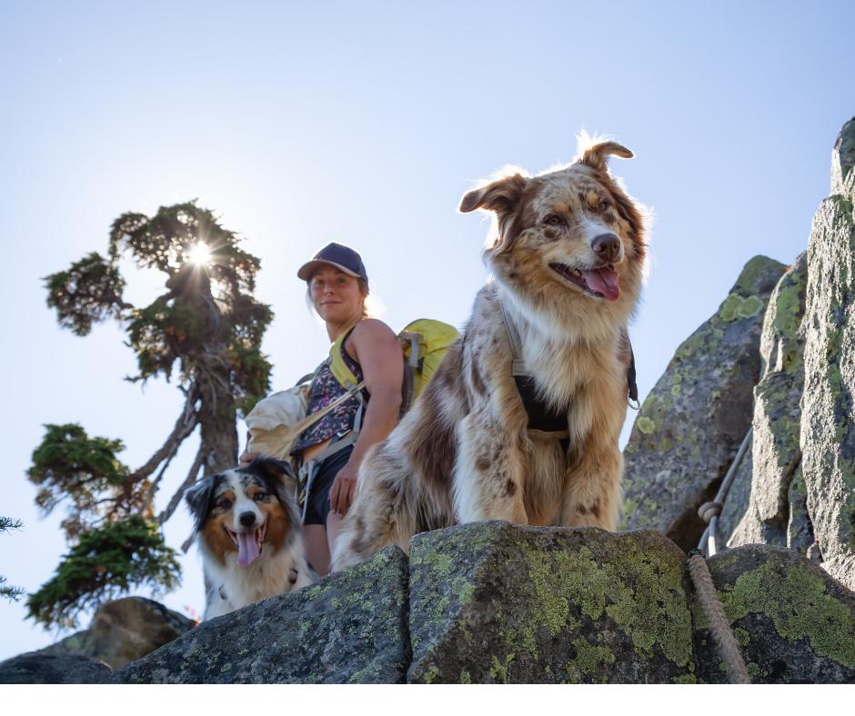 Hiking dog.png