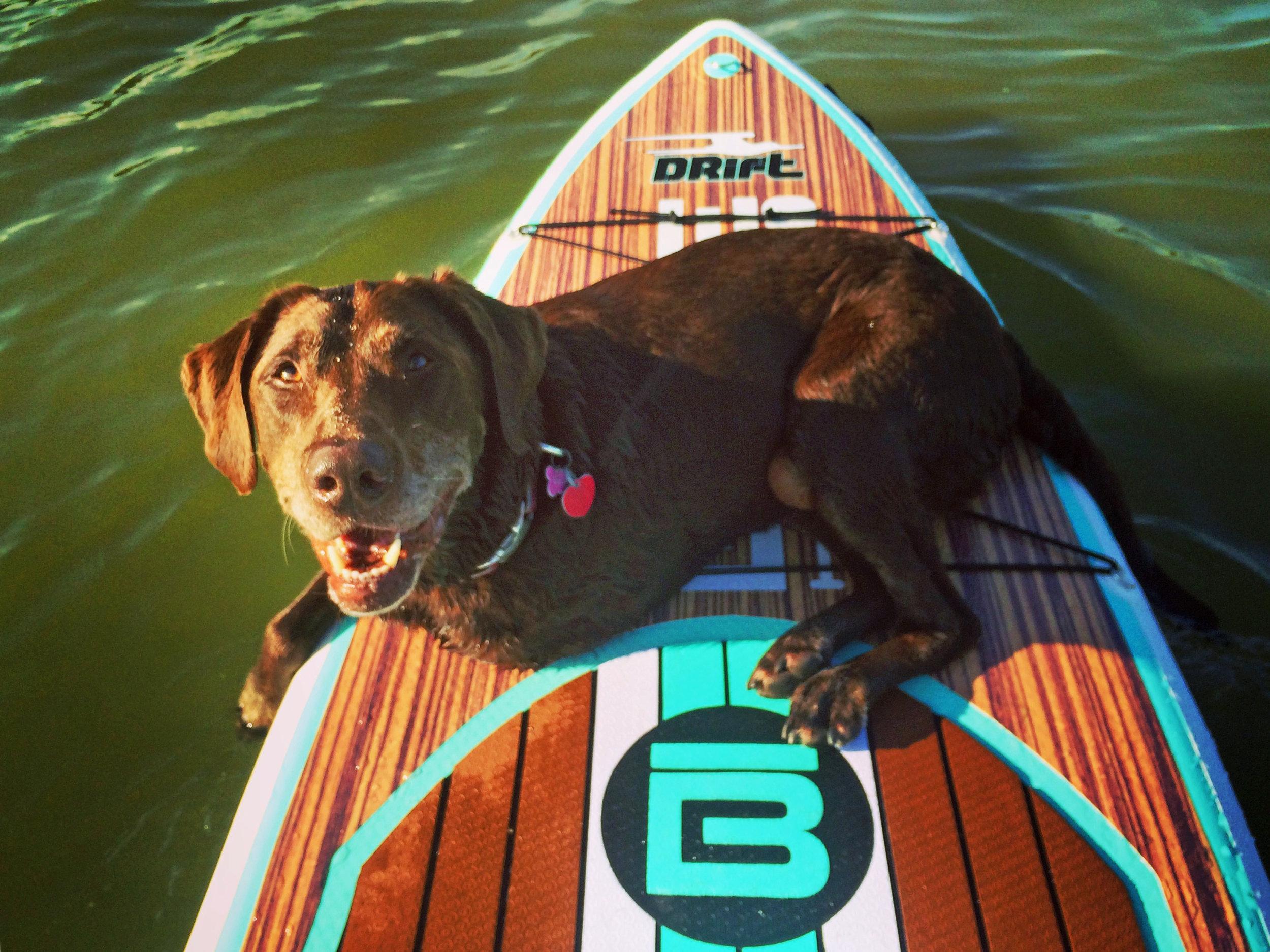 Bella enjoyed riding the paddle board.