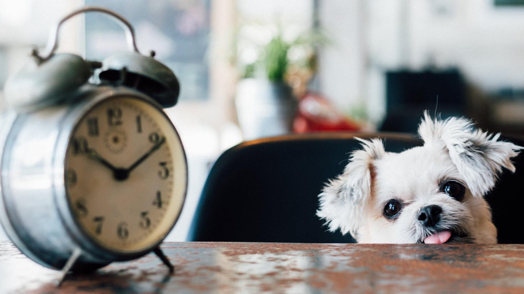 time+dog.jpg