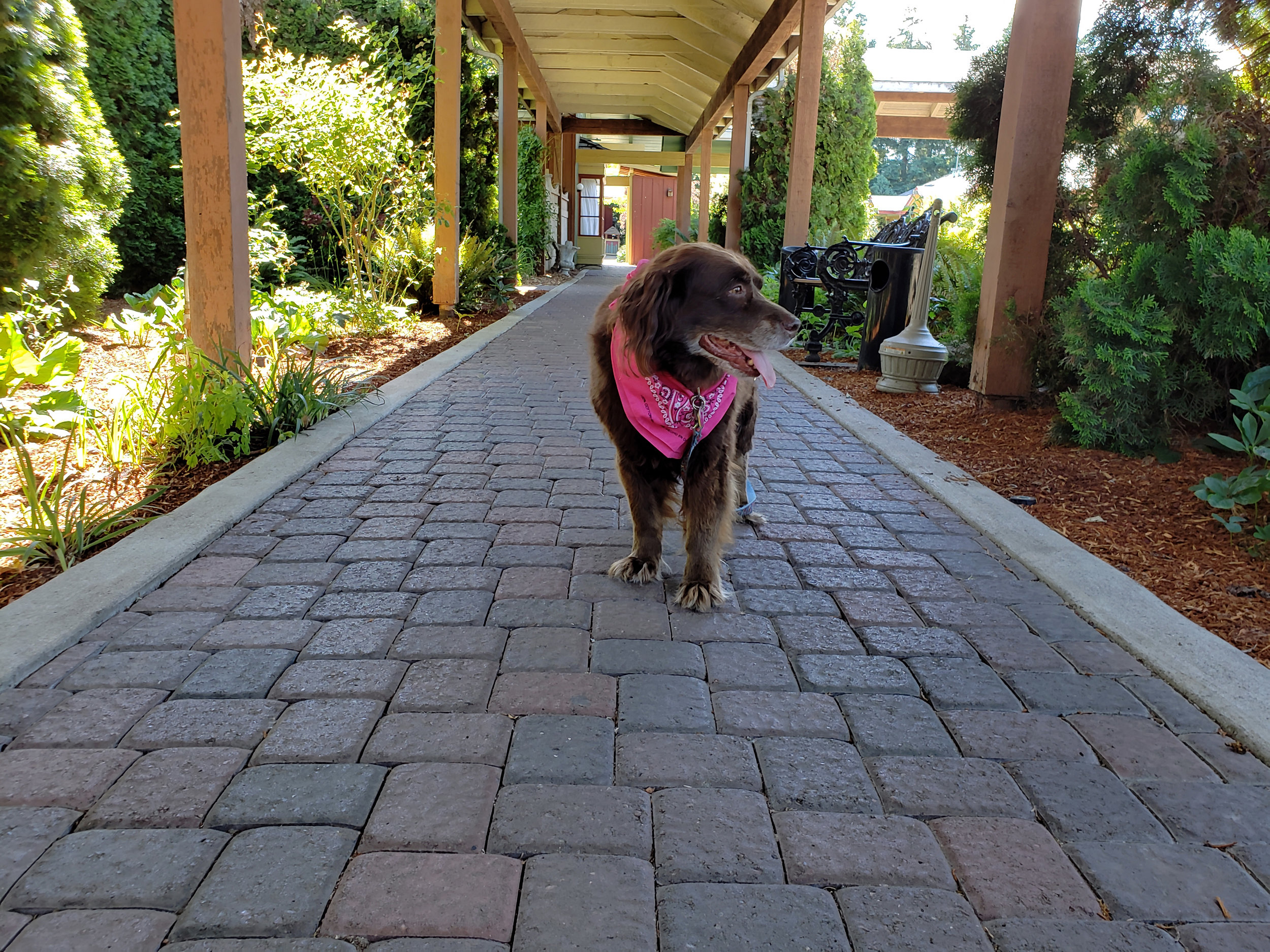 Willow explores The Village Green, a pet-friendly motel and resort