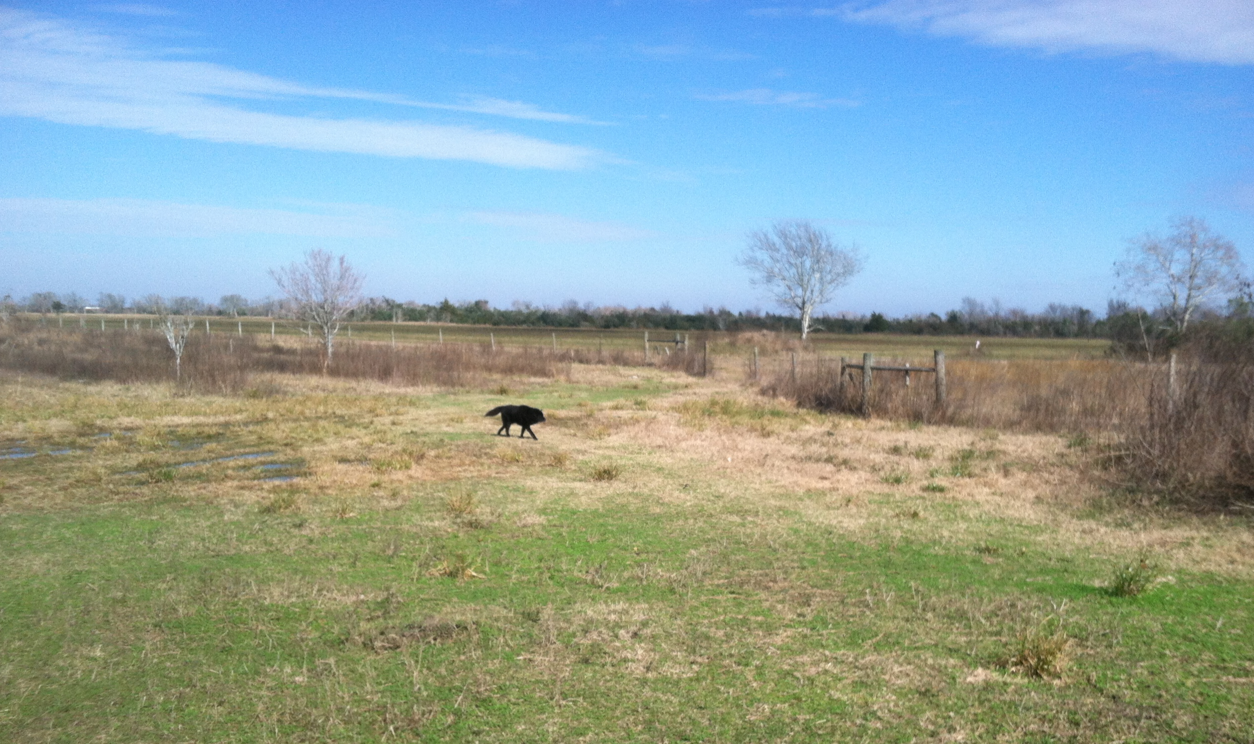 Our man Saxton performs a sound perimeter check of the future veggie beds.