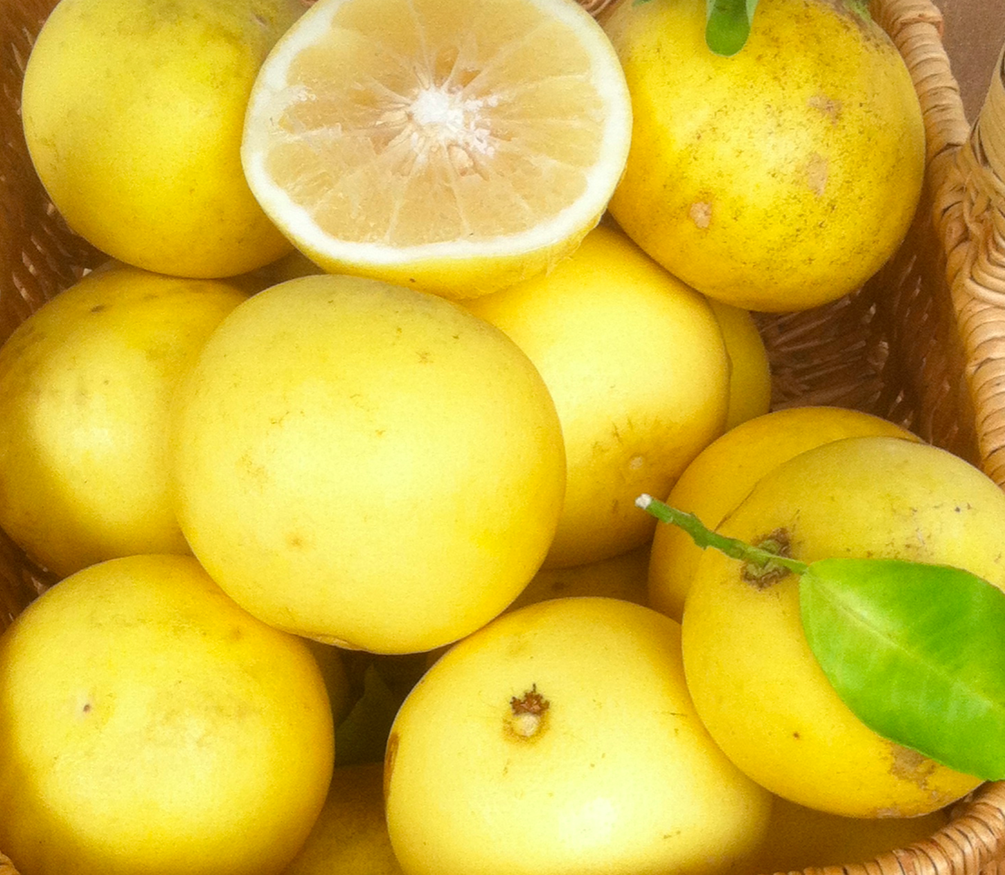 Oro Blancos are juicy, seedy and eye-popping!