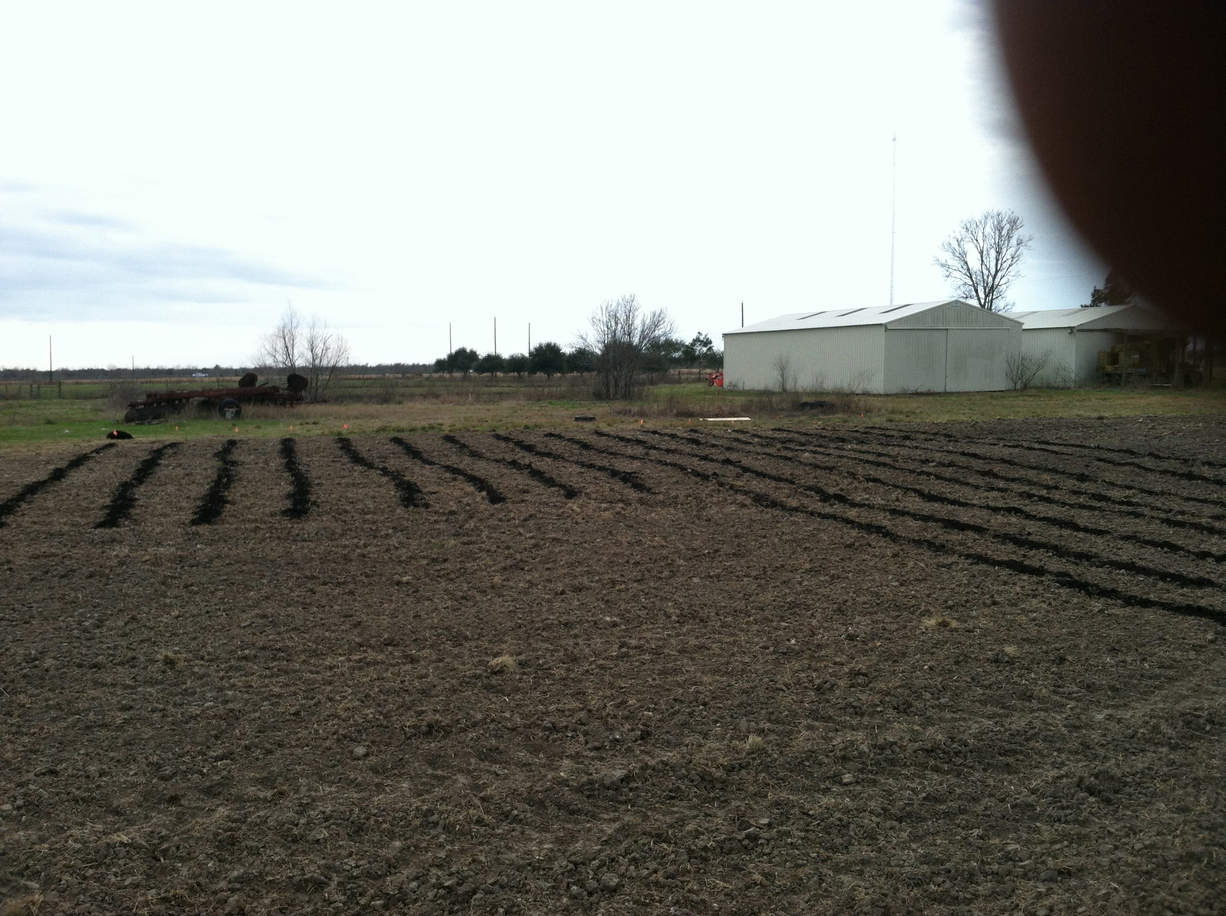 Compost spread through nearly the whole field. The lines mark where our veggie beds will be.