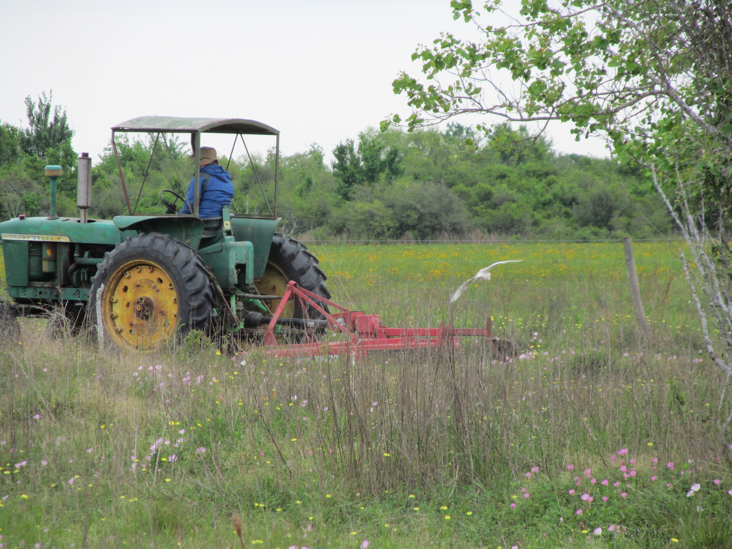 Farmer takes on the perimeter of the orchard, which has turned into quite the forest.
