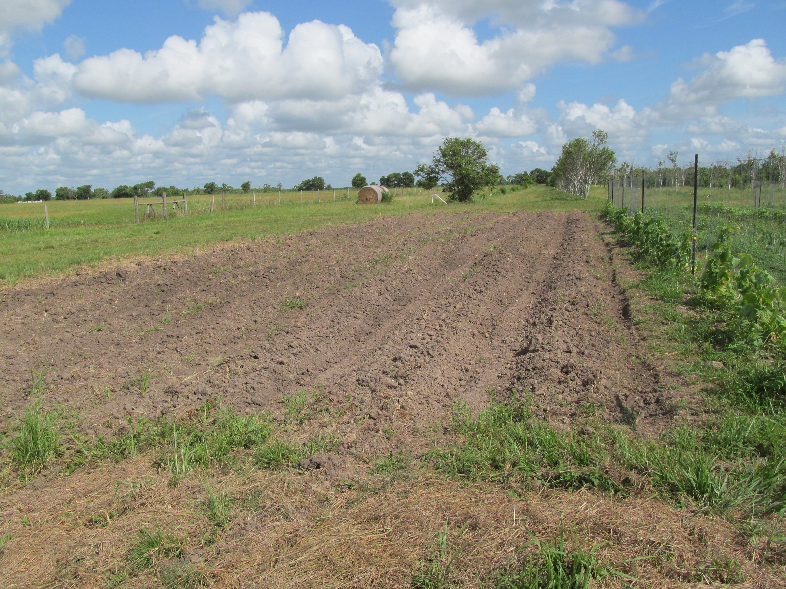 The now-empty potato field, awaiting its sprinkles of buckwheat.