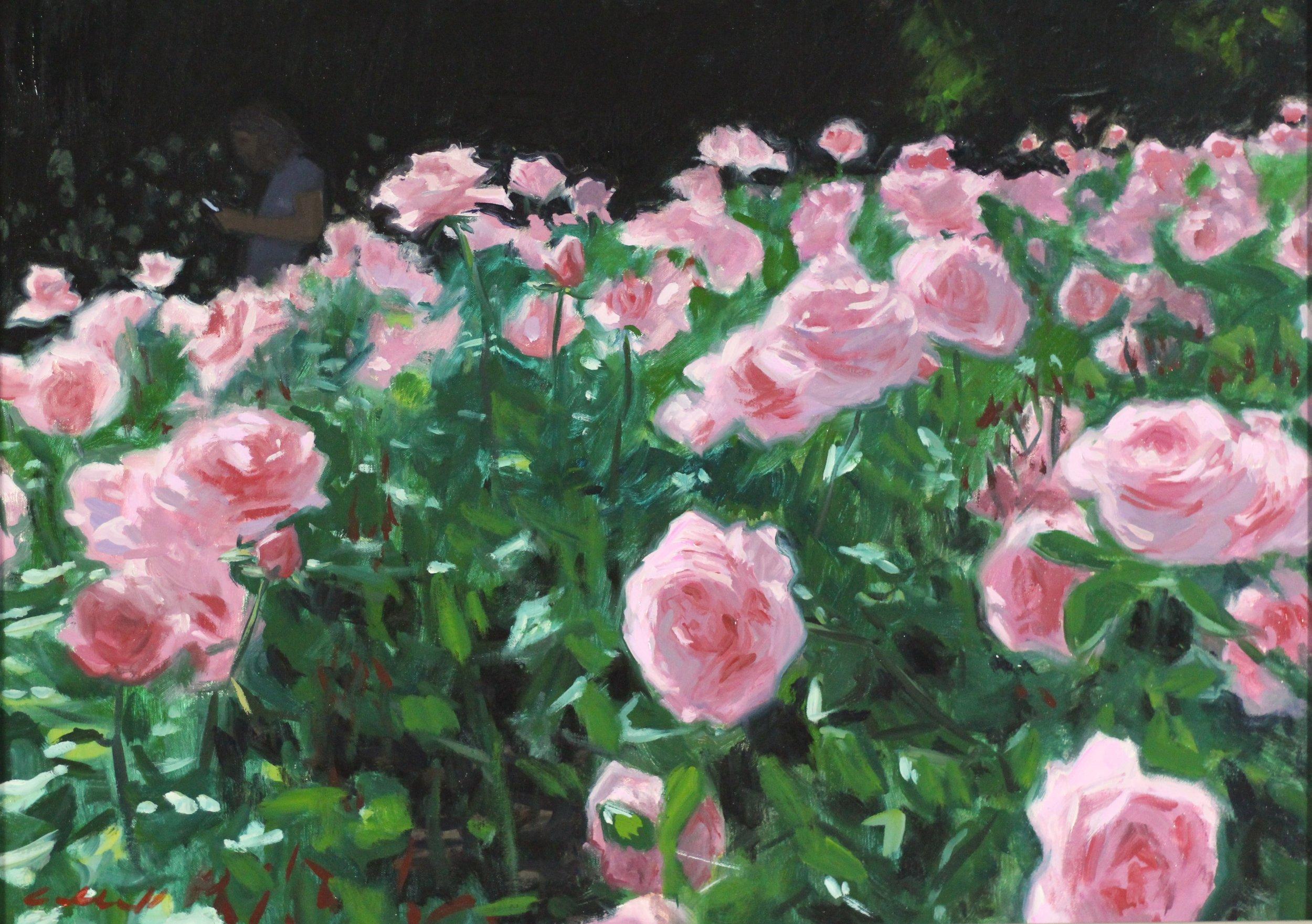 Roses Regent's Park, Oil on Canvas, 49 x 70cm, 2017