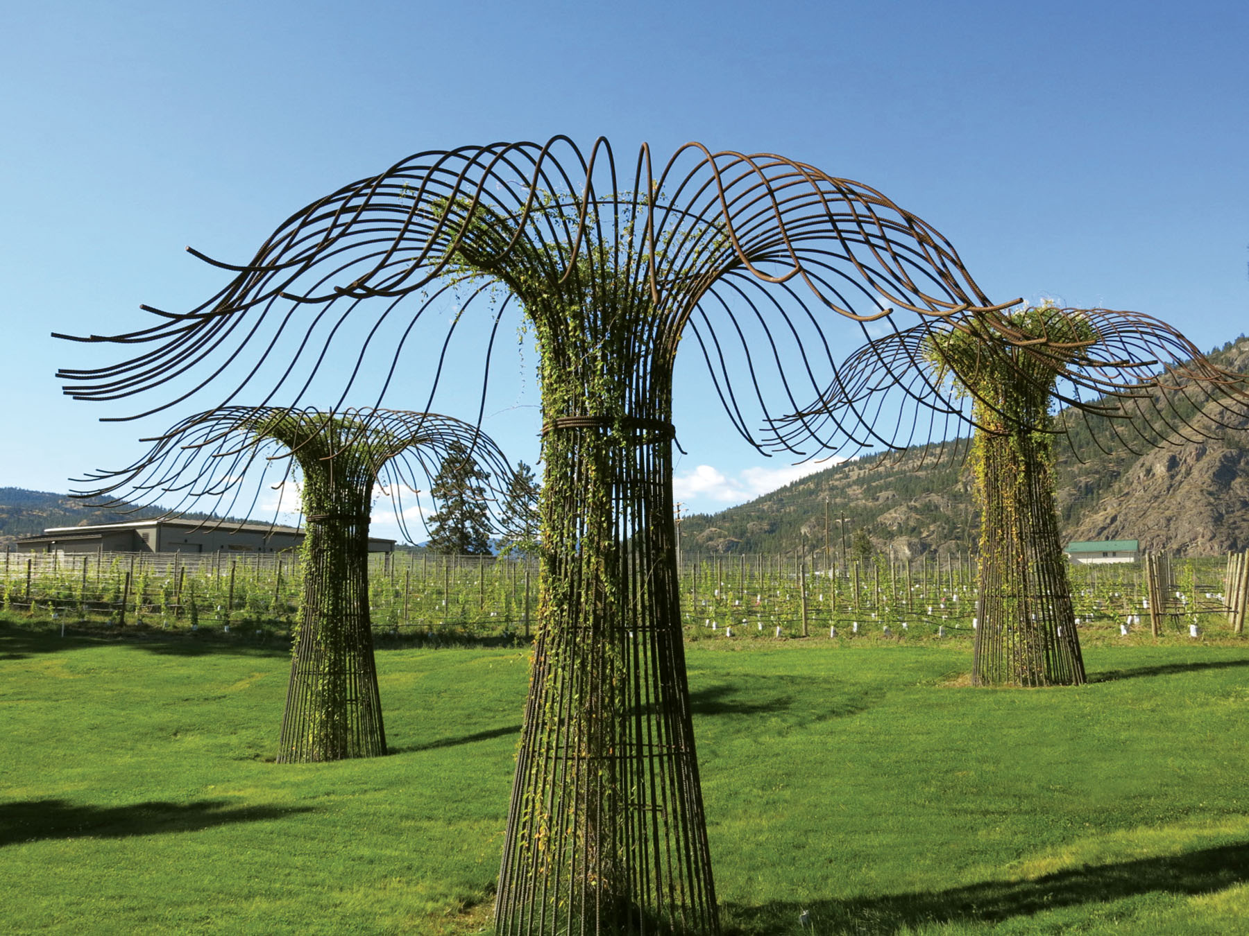 Grid interiors of the steel trees have been planted with silver lace vines