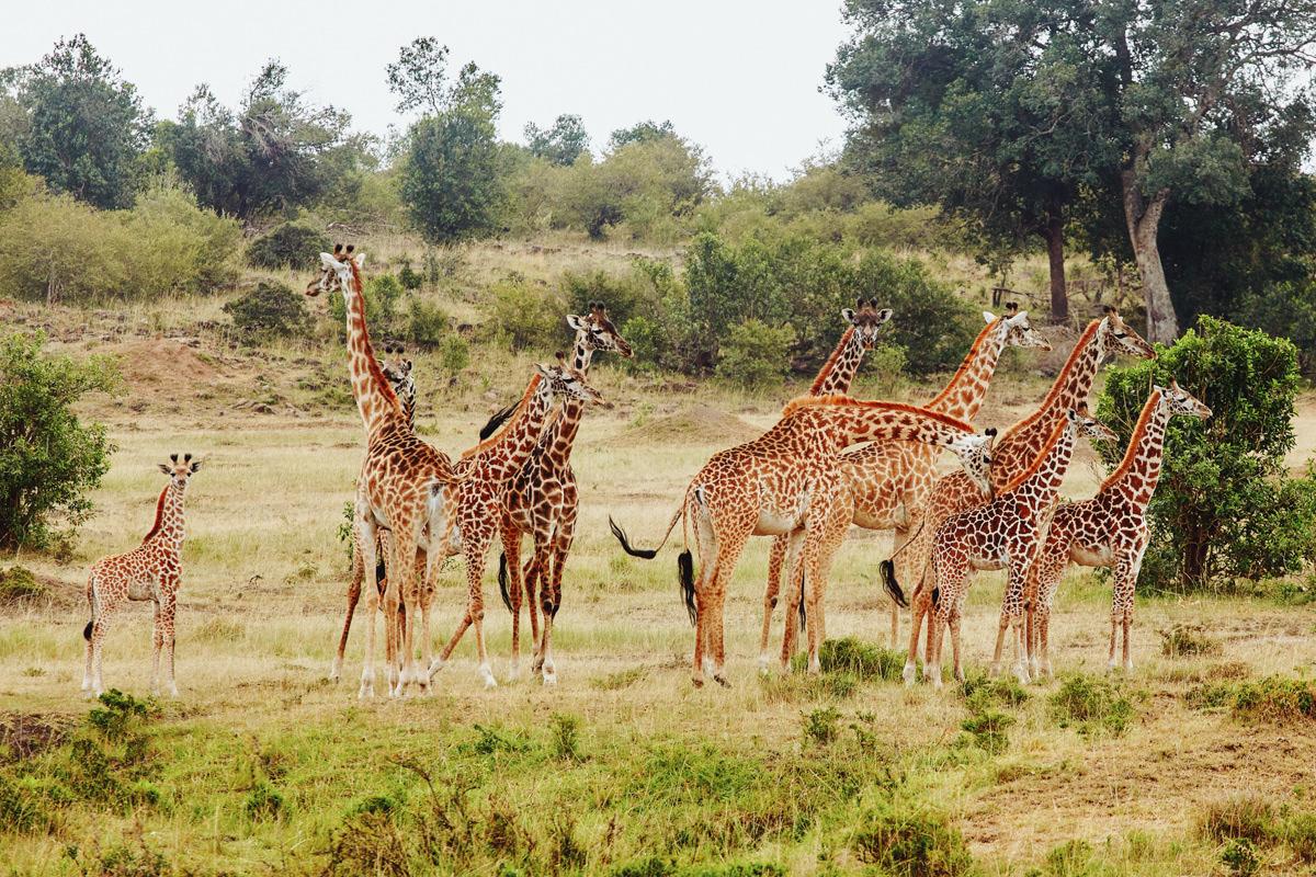 Love Story Session in Masai Mara