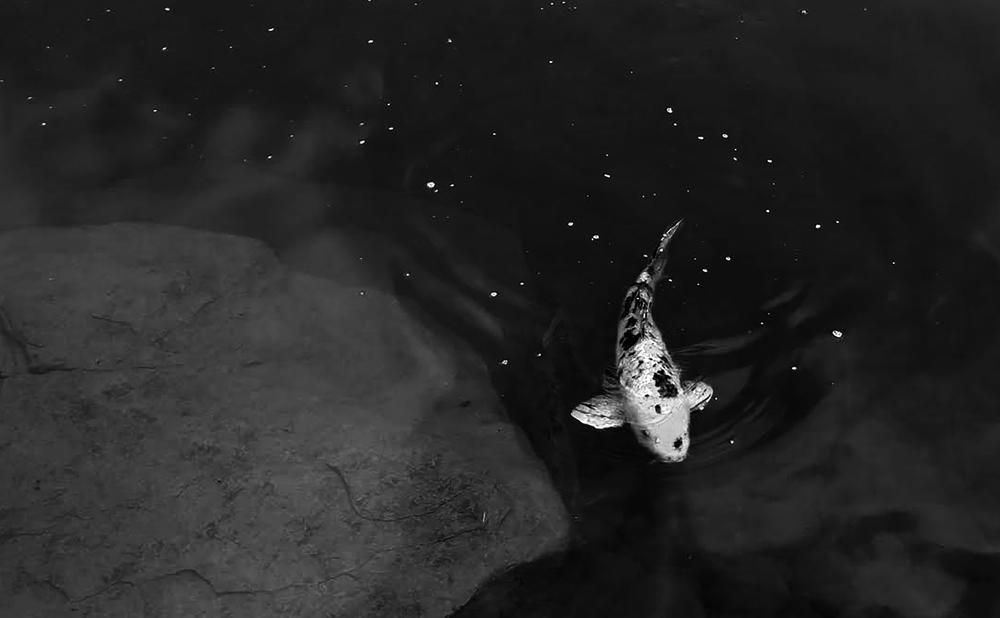 Starry Pond