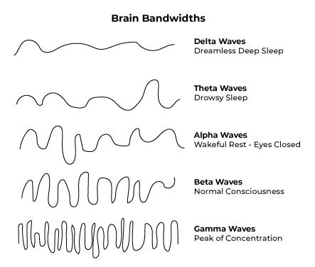 Brain-Bandwidths.png