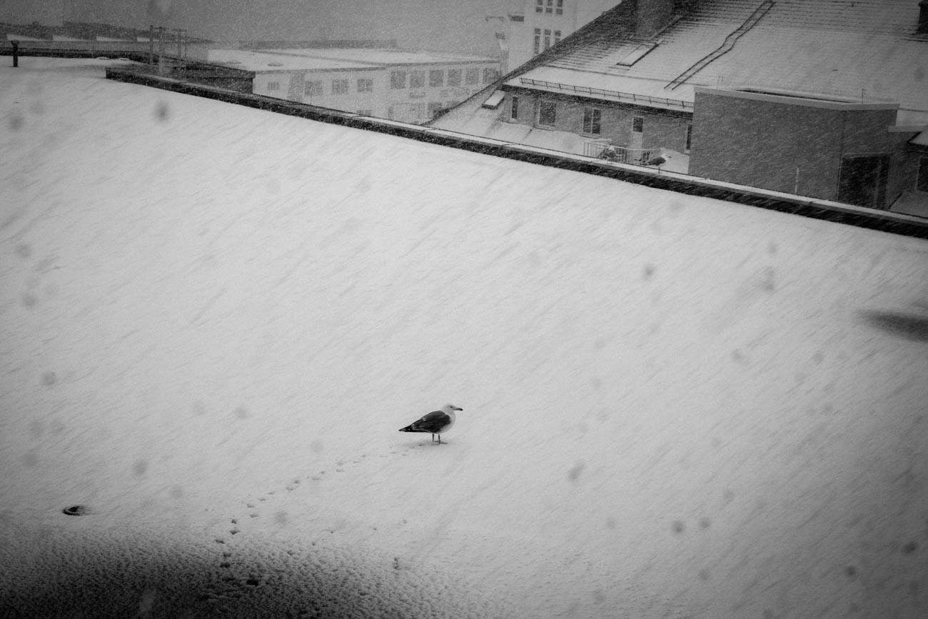 All Images_Lofoten_Svolvær © Alan Thomas Duncan Wilkie-5.jpg