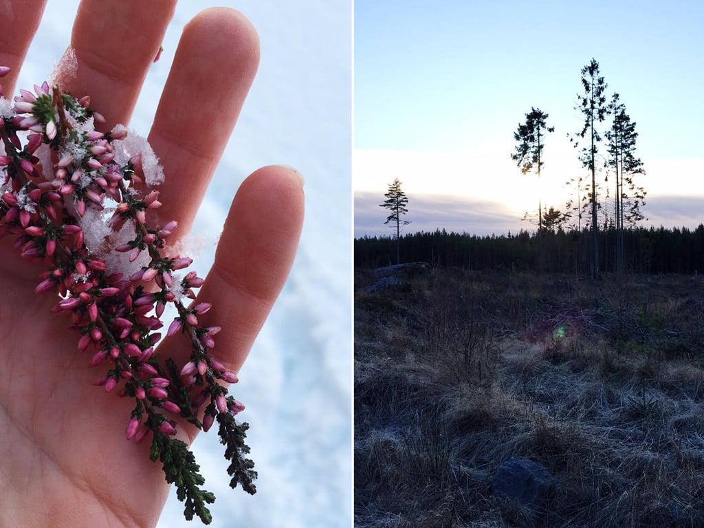 LouiseLjungberg_winter9.jpg