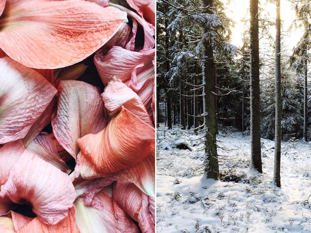 LouiseLjungberg_winter1.jpg