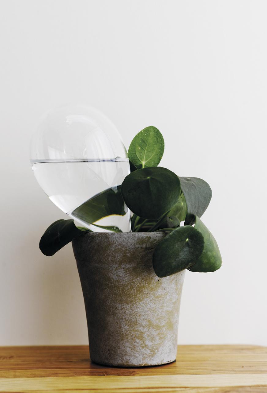 samuji-koti-watering-bulb-photo-sami-repo.jpg