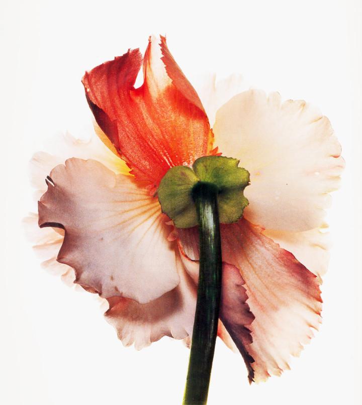 Irving-Penn_Flower_2-720x806.jpg