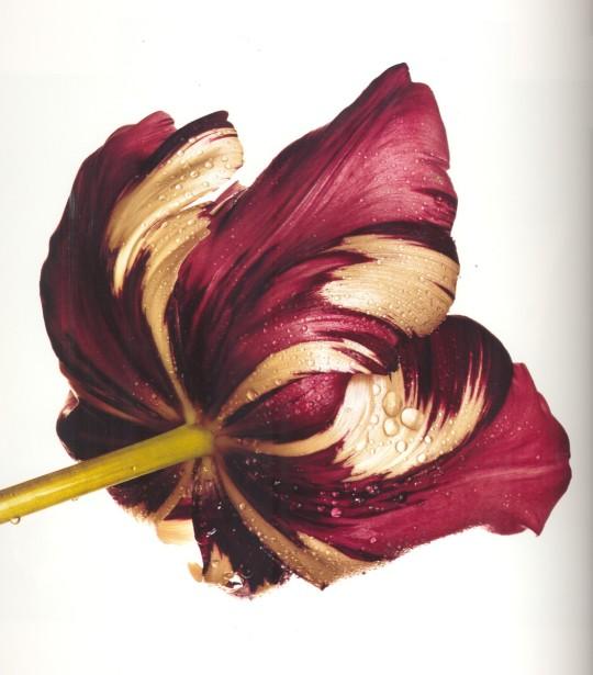 Irving-Penn_Flower_11-540x615.jpg