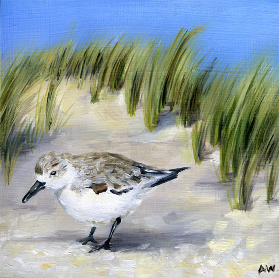 piper-with-seagrass.jpg