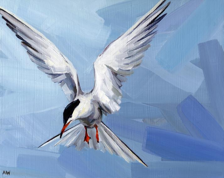 flying-tern.jpg