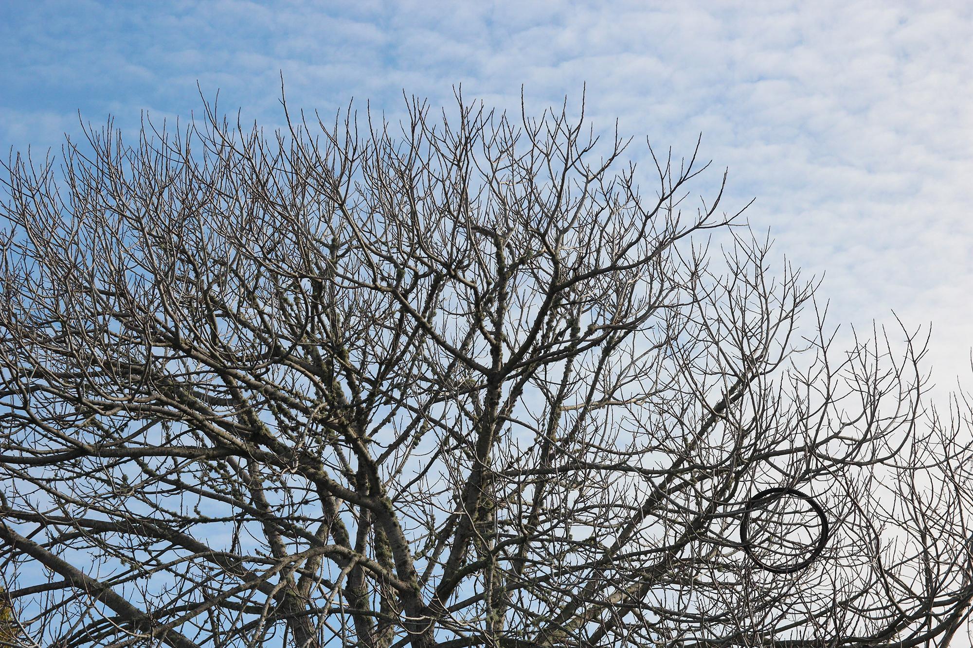 albanybulb_tree-circle_LBerman.jpg