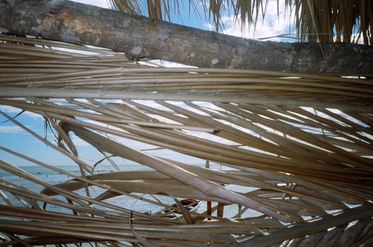 pelican beach Jamaica