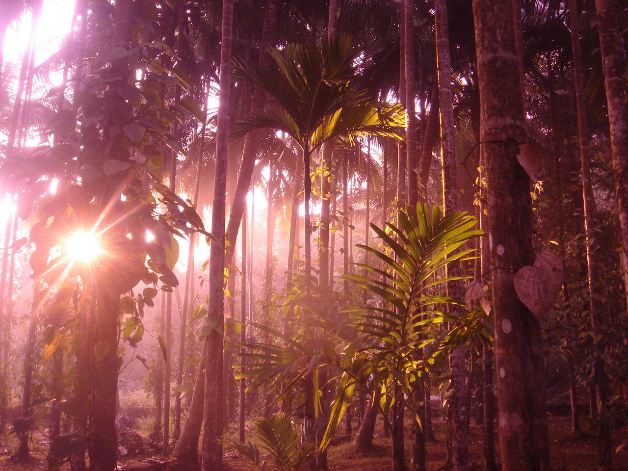 sunrise in pepper valley, goa