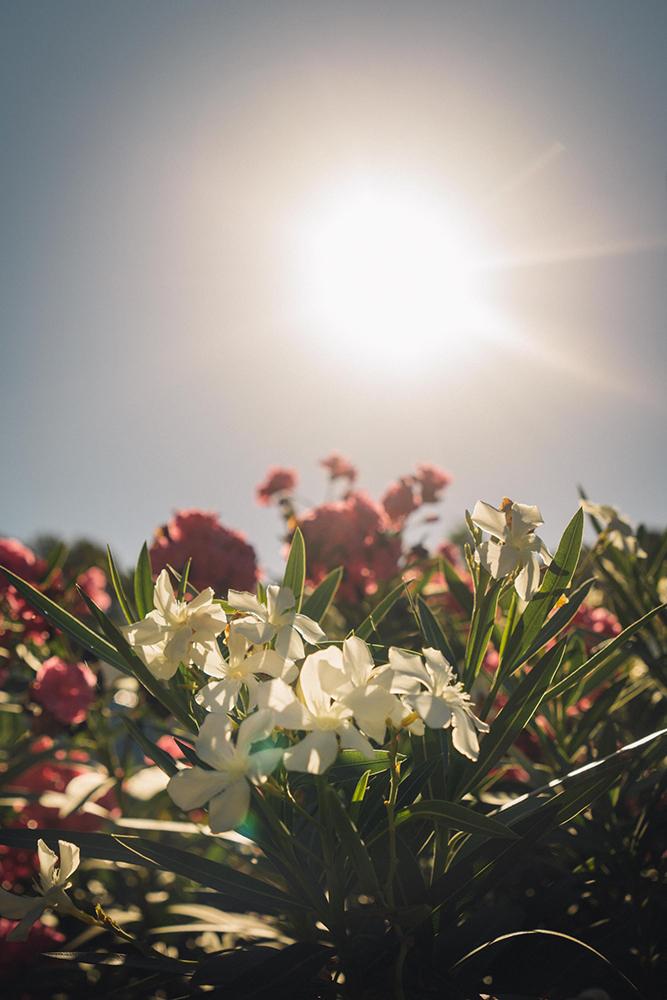 soul-adventures-daffodils.jpg