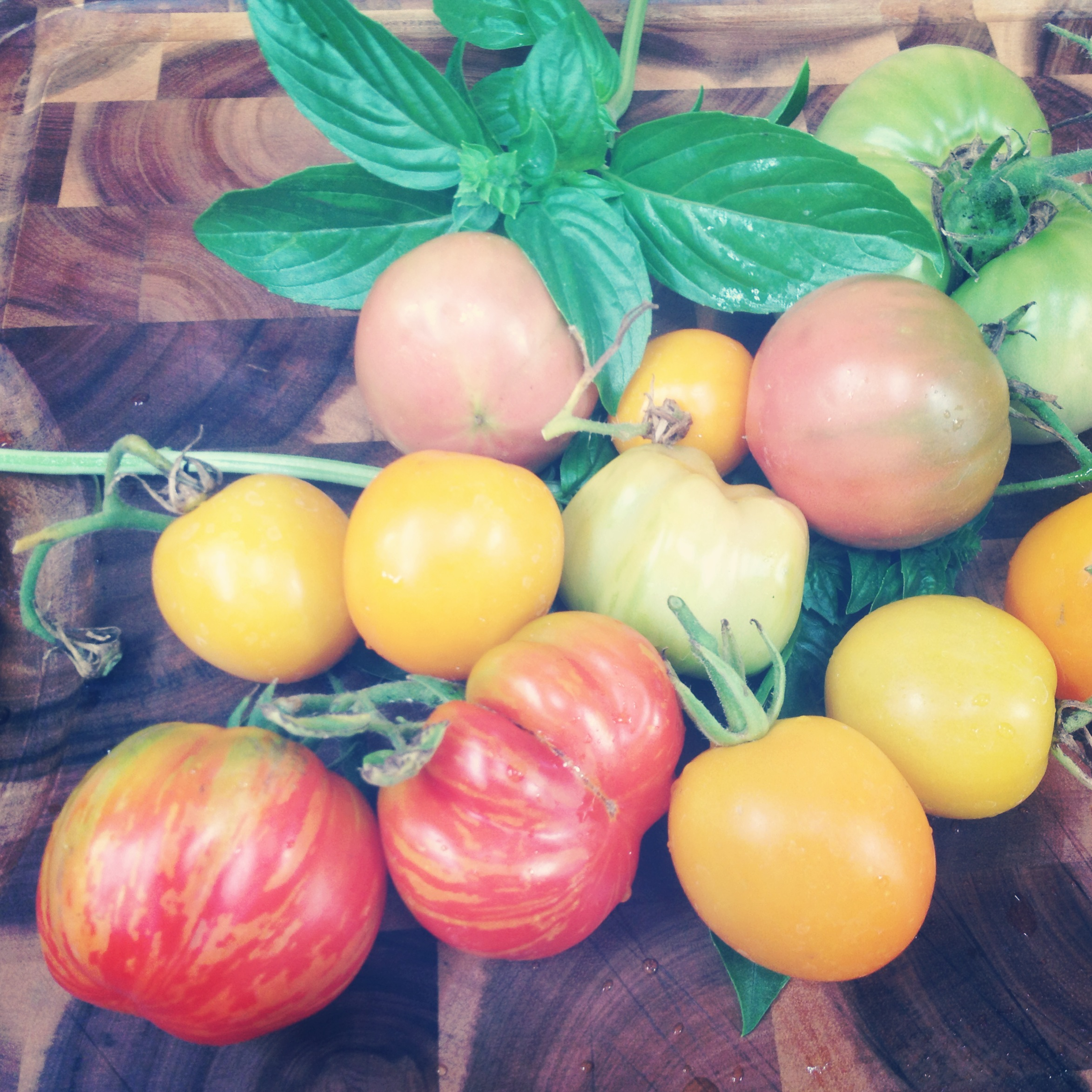 Heirloom Tomatoes.JPG