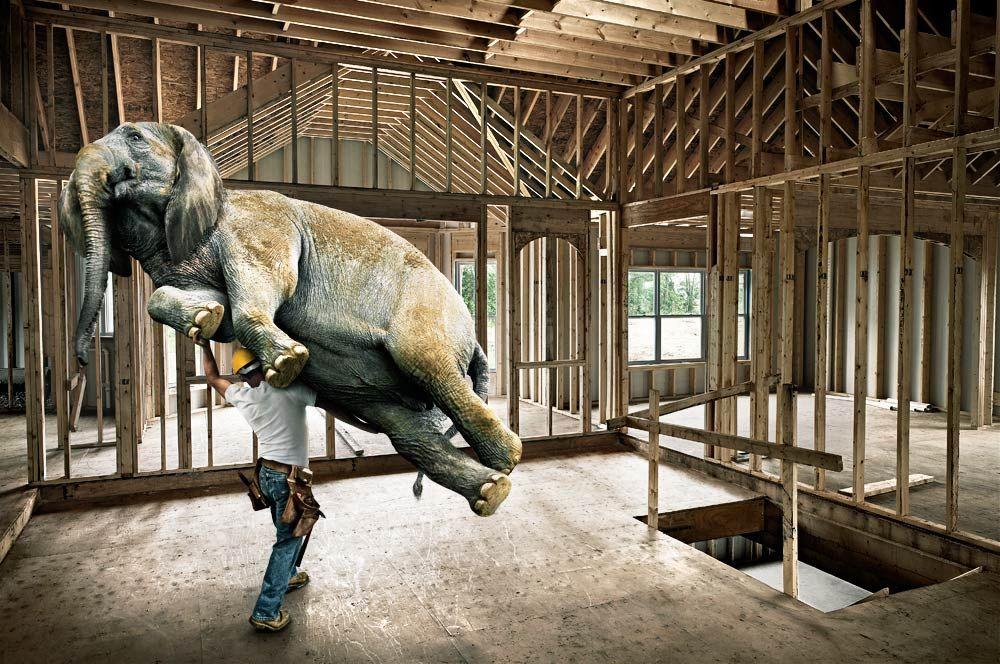 USG-Elephant.LH.jpg