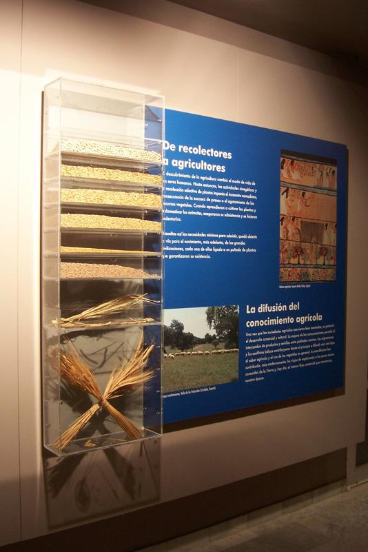 Museo_Botanico_Cordoba_06.jpg