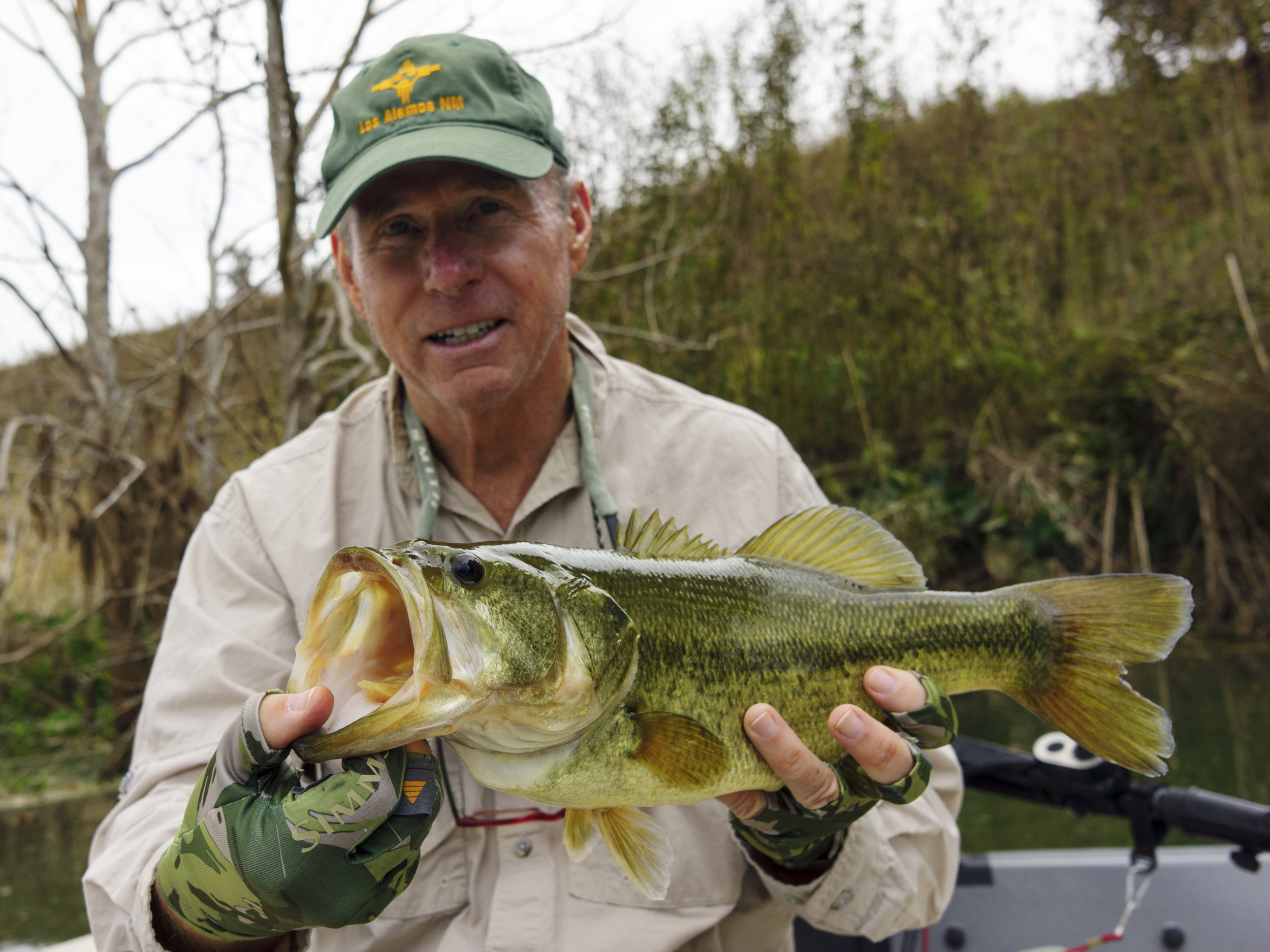 Colorado River bass