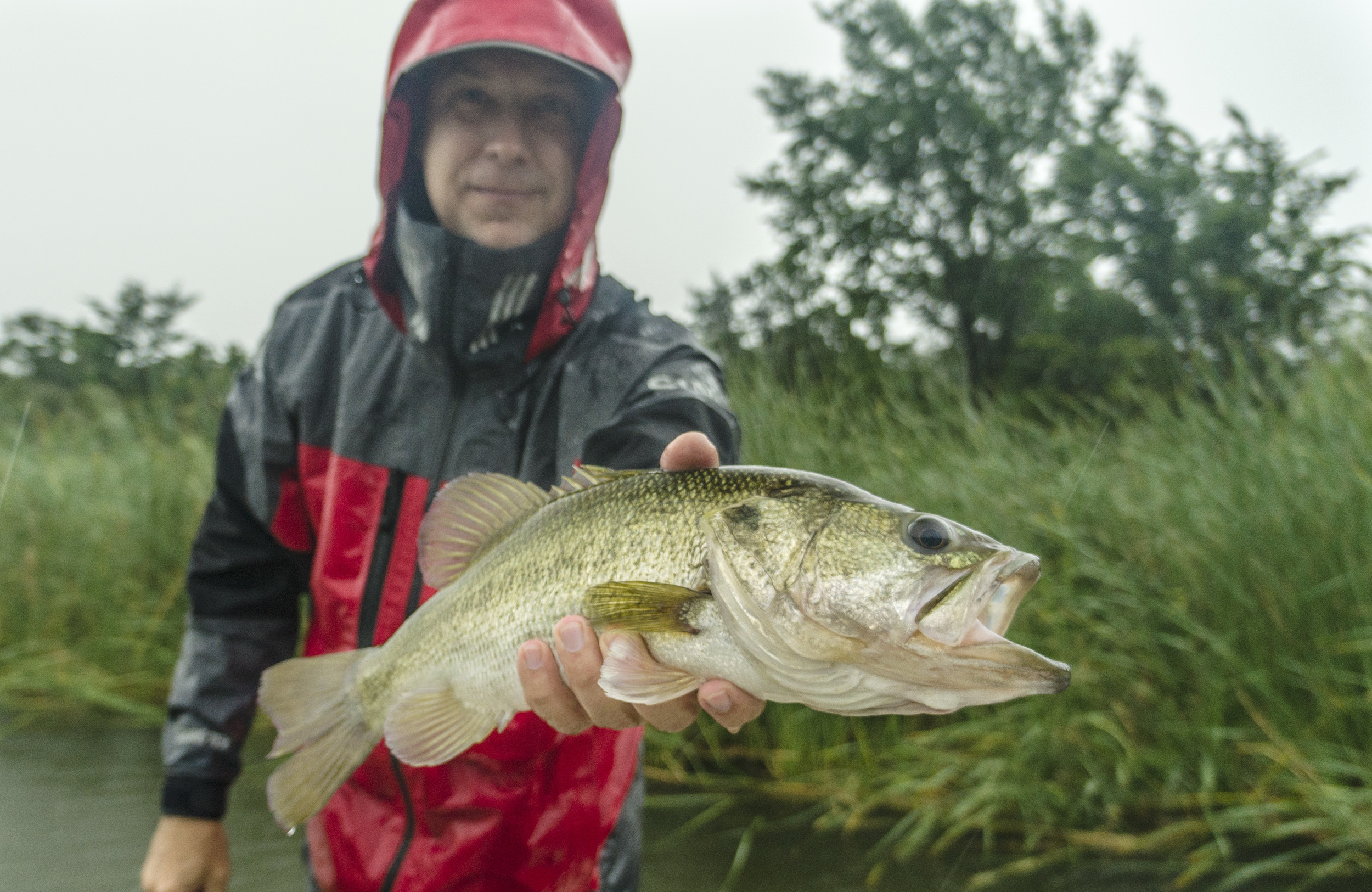 Bass on a Rainy Day
